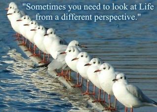 different - birds